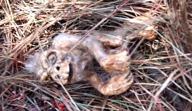 Зародыш снежного человека нашли в лесу