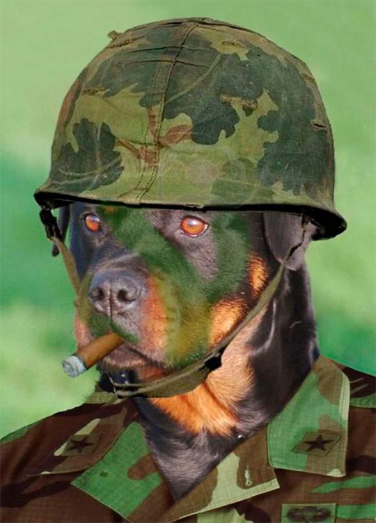 картинки военные животные стильные