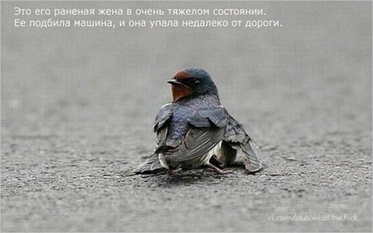 Любовь есть везде.  Трагедия одного стрижа.