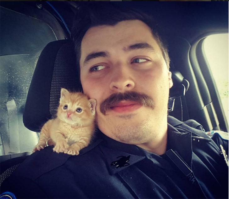 Коп из Южной Каролины спас котенка и взял его в напарники