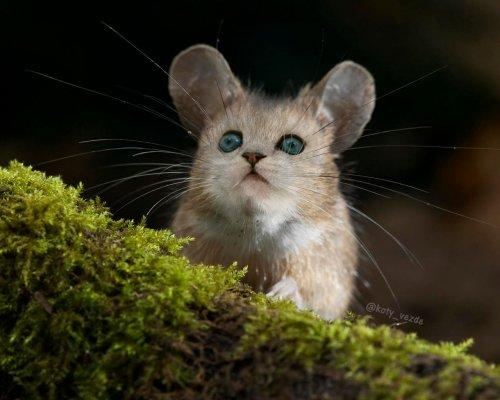 Котейки прелестны в любом обличии