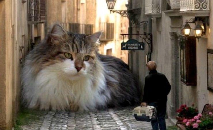 Для чего созданы коты