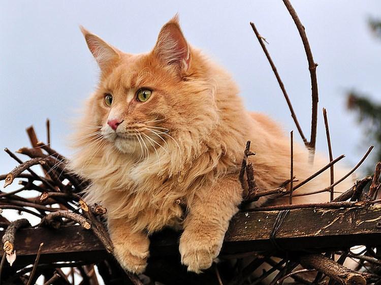 Лет пять назад, когда Саша ещё работал в одной серьёзной уважаемой организации, его начальнику понадобился кот