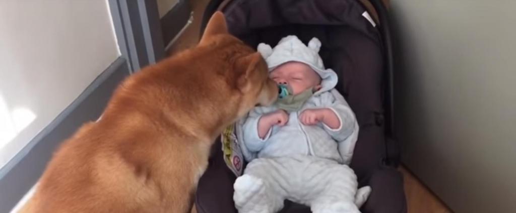 Реакция пса, который увидел новорожденного, неподражаема истории из жизни,супер