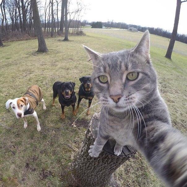 Селфи-история одного кота
