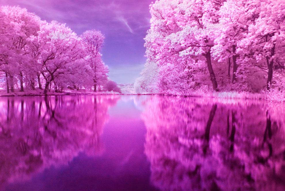 Картинки природы в фиолетовых тонах