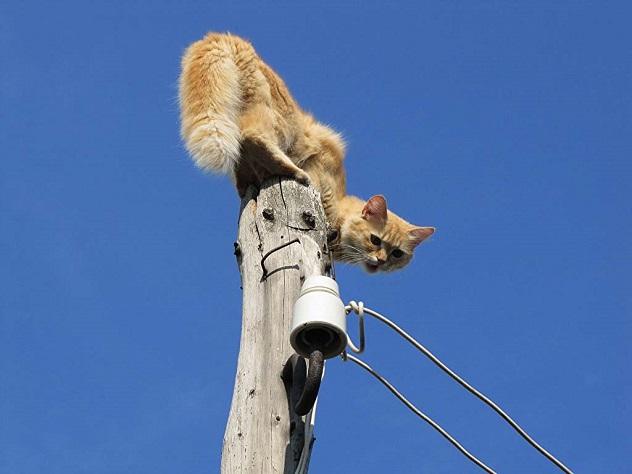 Специальные службы спасли кота в Дербенте