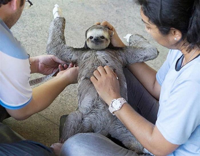 Животные, которым чешут животики