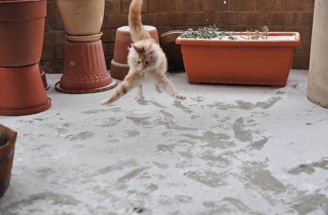Зима и кошки