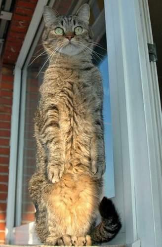 Кот-суслик