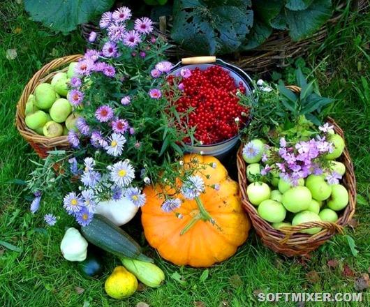 Разные садовые хитрости и полезности