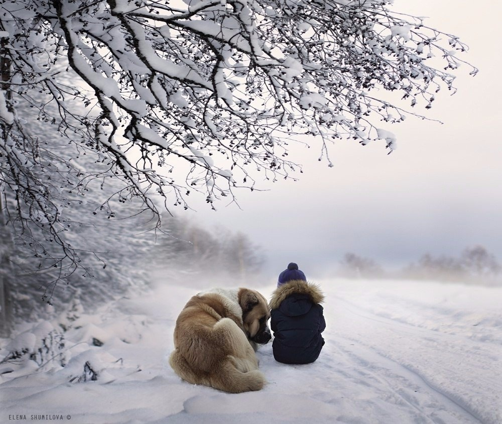 шид зимним в