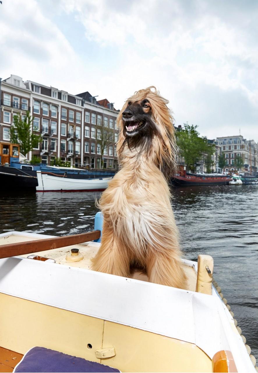 Портреты амстердамских домашних животных. Фотограф Изабелла Розендал 6
