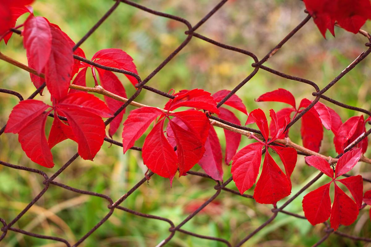 Как облагородить забор из сетки: практичные, милые и смелые идеи