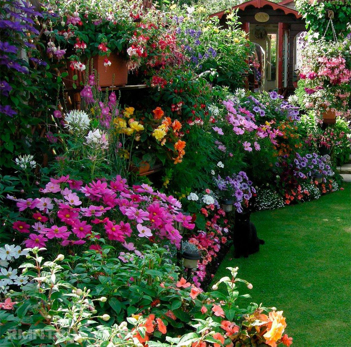 создать образ цветы для дачи фото картинки некоторых