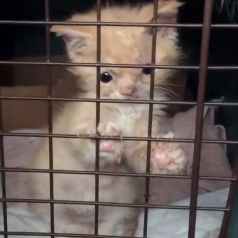 Маленькую особенную кошечку выбросили, как ненужную вещь