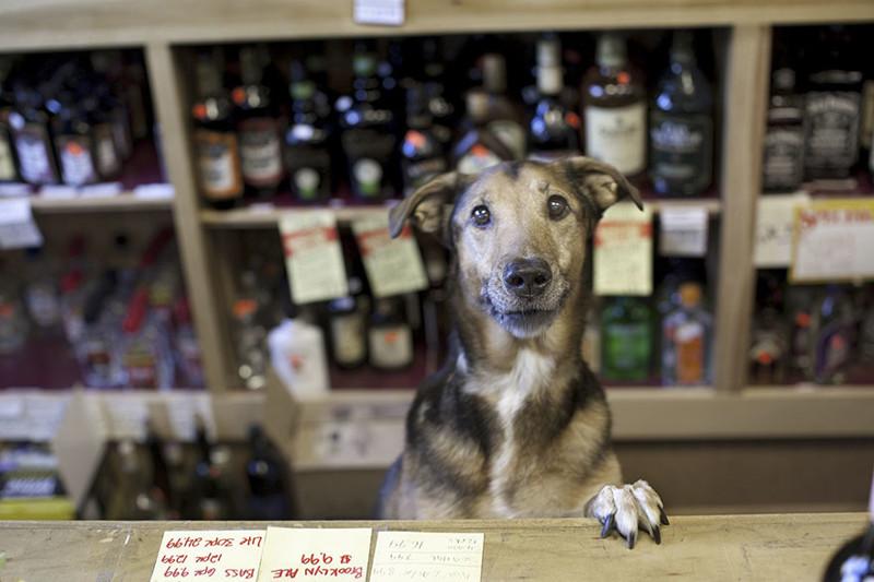 Мерфи (10 лет) собаки, фото собак, фотографии животных
