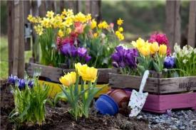 Луковичные цветы: когда и как делать посадки, какие цветы сажать