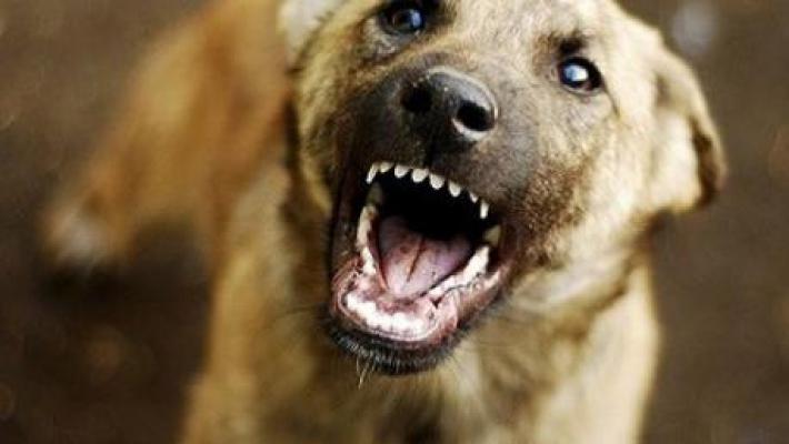 Как защититься от стаи диких собак выживание