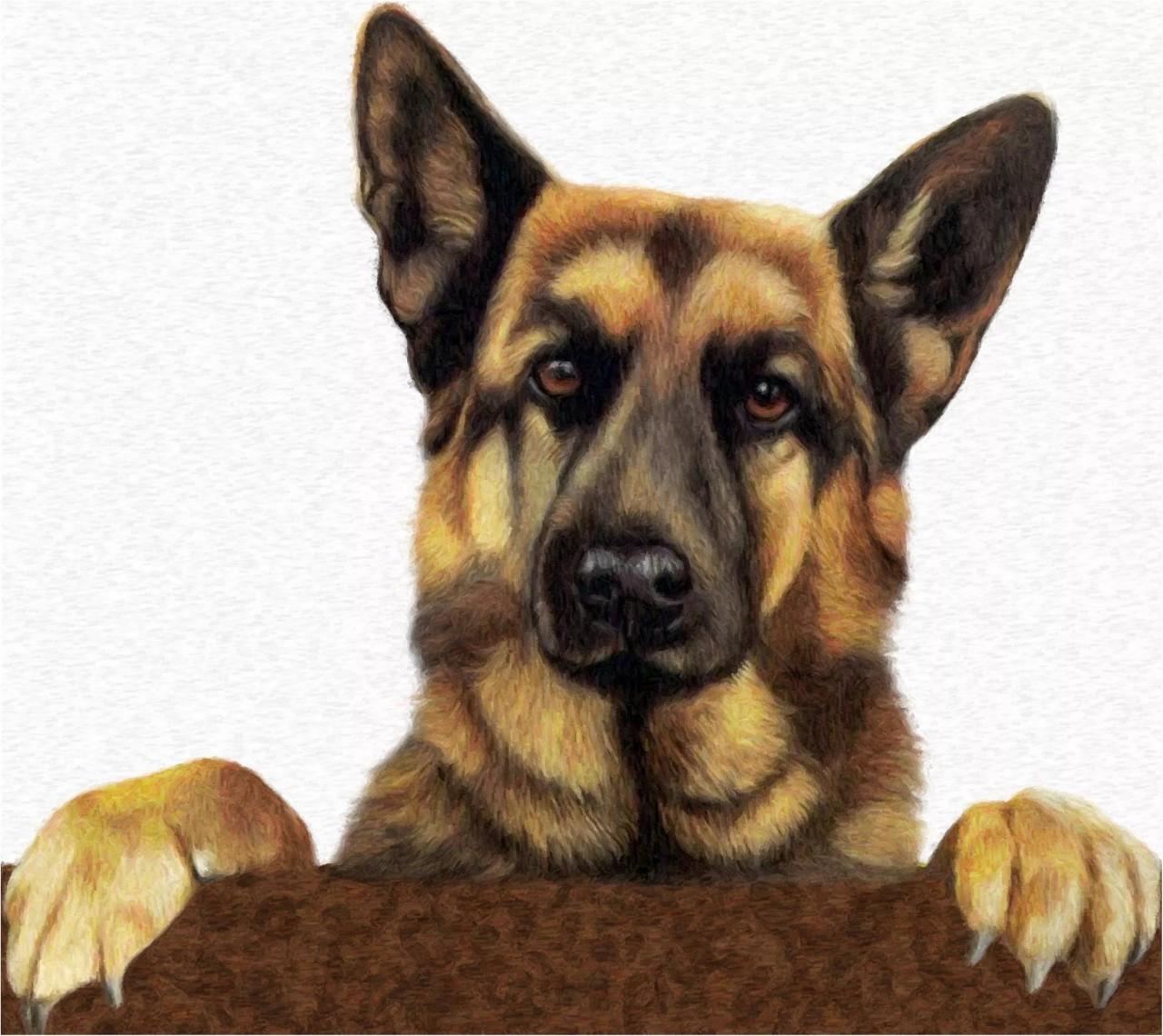 Картинки собаки овчарки спасибо за внимание, день водителя
