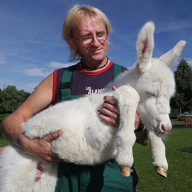 В немецком зоопарке родился ослик-альбинос