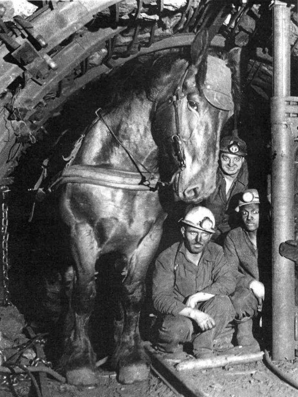 Шахтёры и их рабочая лошадь в забое. Франция, 1970 год история, картинки, фото