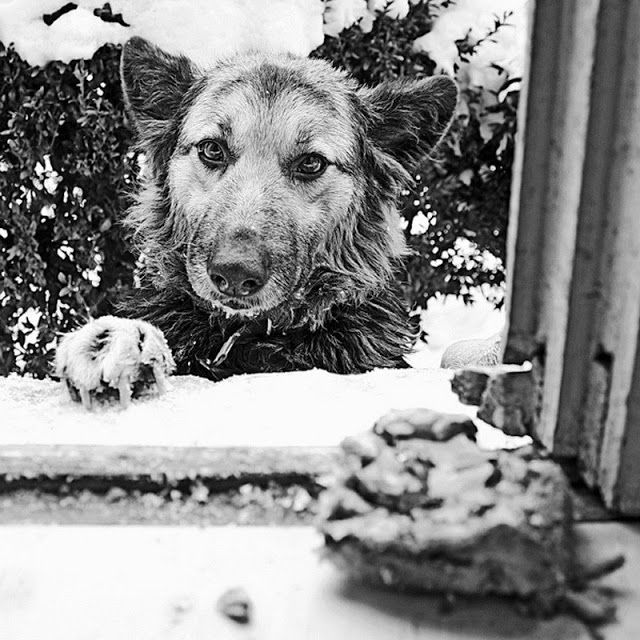 Письмо стареющей собаки