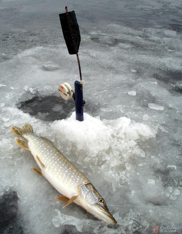 Ловля щуки на озерах зимой