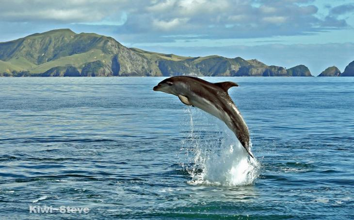 Позитивные фотографии веселых дельфинов