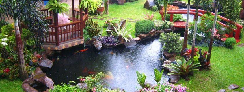 Декоративный пруд: эффектное украшение вашего сада