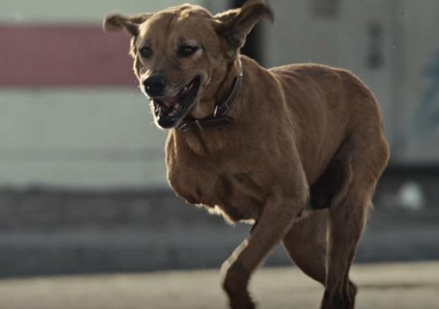 Героическая собака закрыла детей своим телом