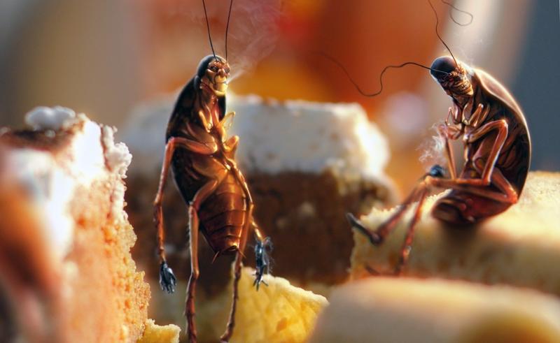 Куда делись тараканы: почему…
