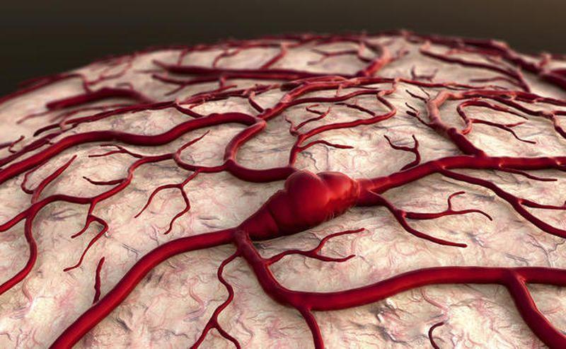 Как разжижать кровь в органи…