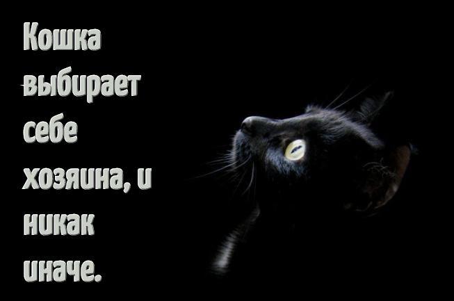 Смешные цитаты и афоризмы о кошках