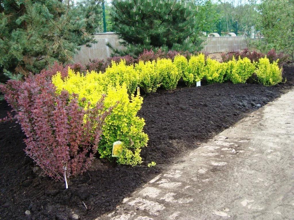 Осень – пора посадки декоративных кустарников