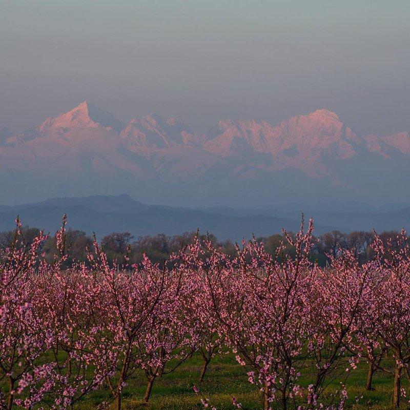 Апрельское утро на Кавказе, Кабардино-Балкария горы, леса, природа, природа России, российская природа, россия