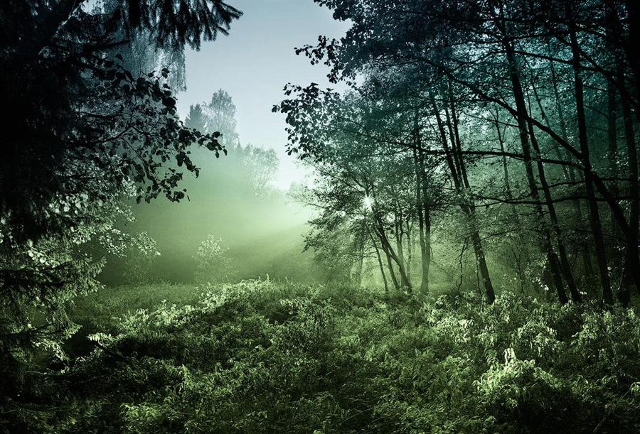 Природа в фотографиях Сергея Тигарева
