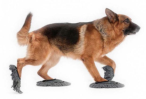 Изобретения для собак, без к…