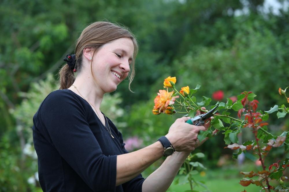 Как обрезать розы перед посадкой осенью — Мир цветов