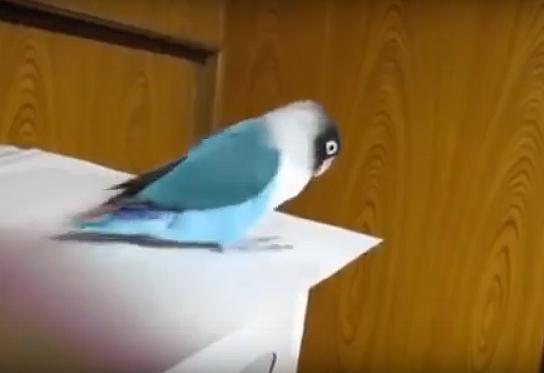 Попугай, который любит ирландские танцы