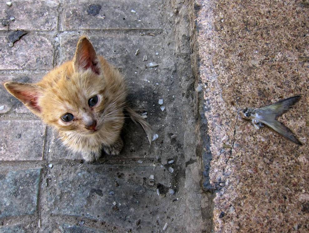 Бриллиант для Мурки. Пермячка продала драгоценности ради бездомных животных