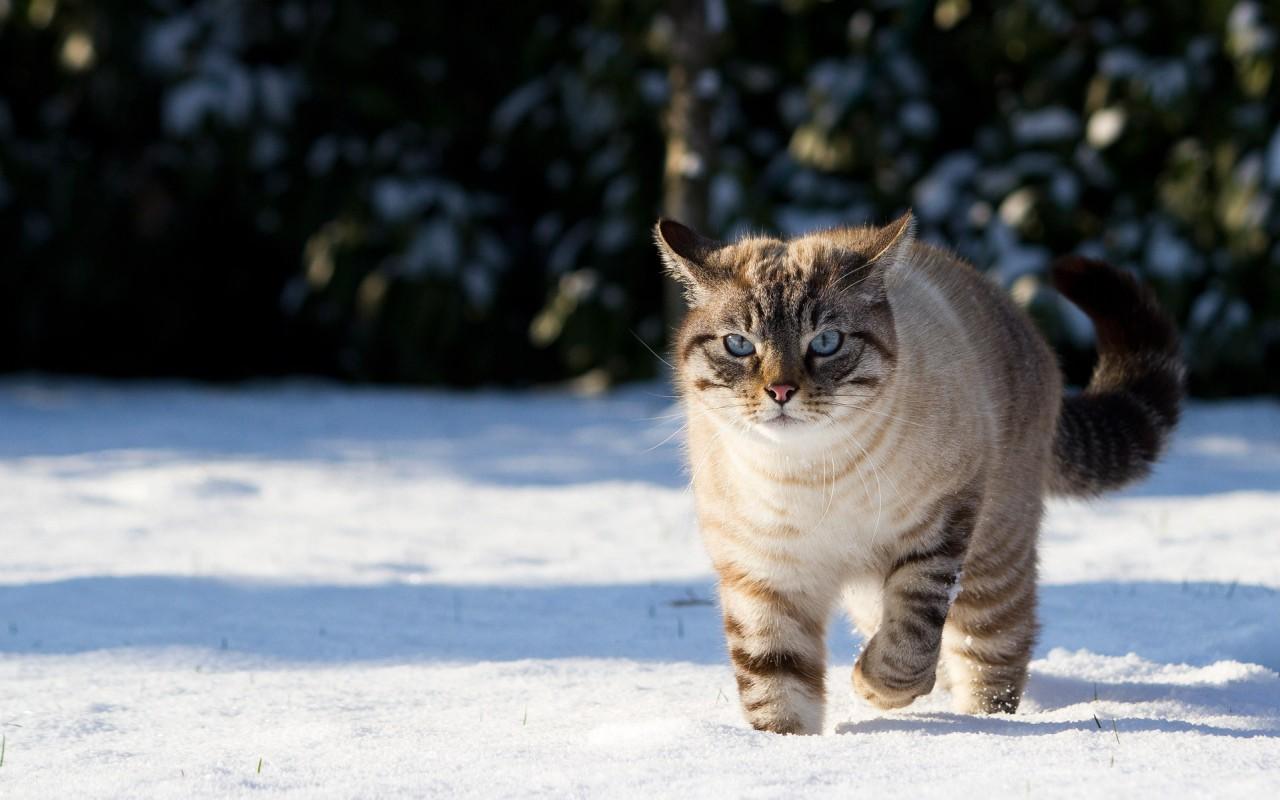 Четыре времени кота...