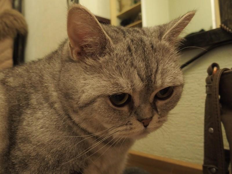 Кошачья фрустрация