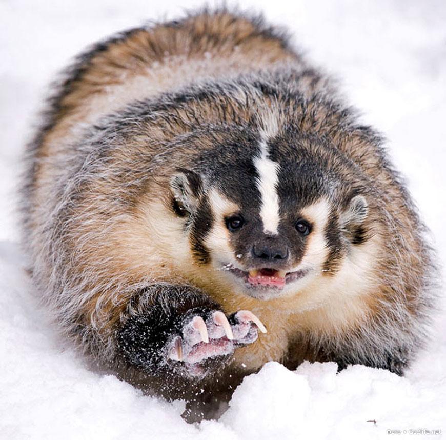 40 фото. Джонатан Гриффитс: опасная фотосъемка диких животных