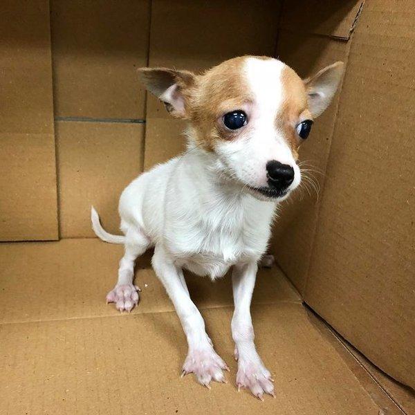 Ветеринар отказался усыплять «бракованного» щеночка
