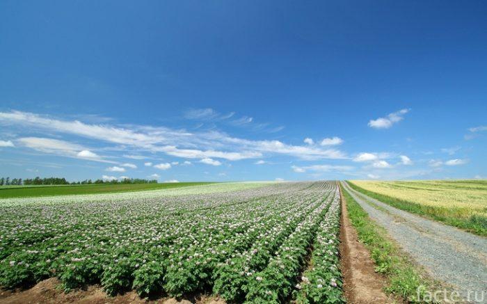 сельское хозяйство поле