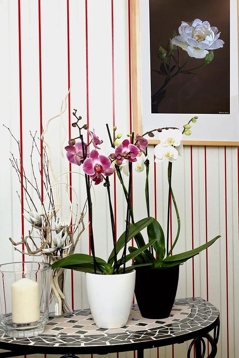 Орхидеи в дизайне спальни