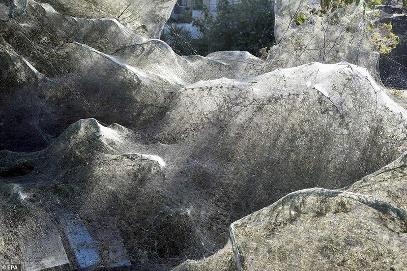Полчища пауков оккупировали пляж греческого острова Айтолико греция, жутко, насекомые, нашествие пауков, новости, пауки, паутина, природа