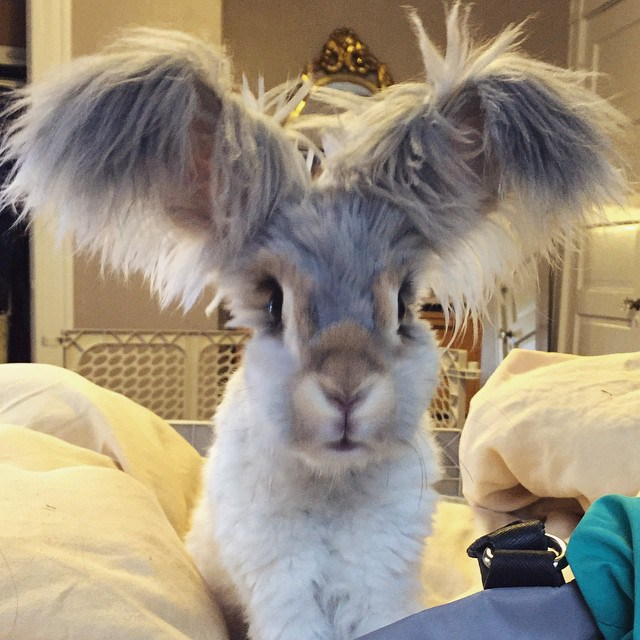 Уолли — Кролик, Чьи Уши Напоминают Крылья Ангела