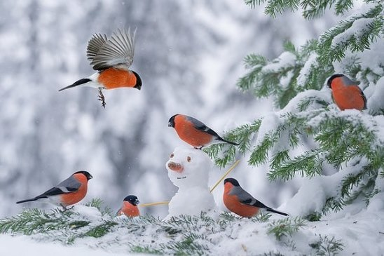 Снегири.Зима.